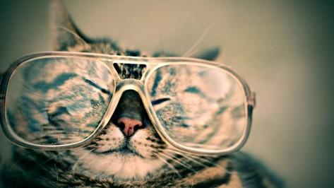 HappyCat in glasses
